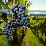 Métiers de la filière vitivinicole