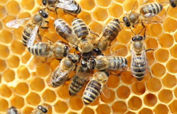 Les abeilles peuvent apprendre à résoudre des problèmes complexes